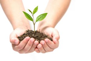 seed hand